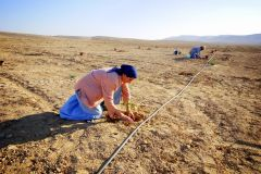 Greening The Negev