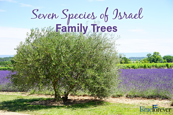 Seven Species of Israel Family Trees