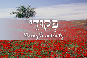 Strength in Unity: Parashat Pekudei